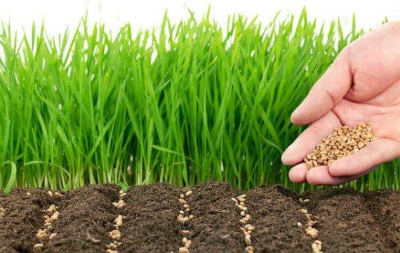 посевной газон под ключ с грунтом