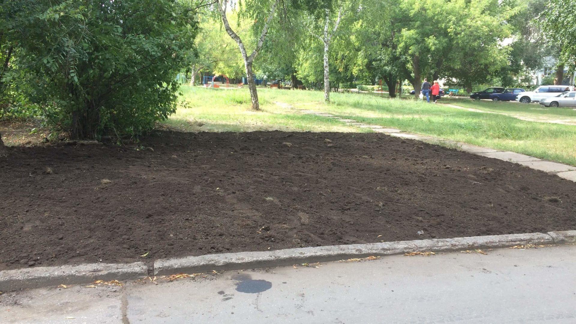 восстановление газона проспект Просвещения 31 фото